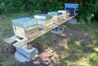 Bienen01.jpg