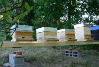Bienen02.jpg