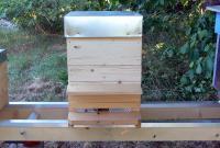 Bienen03.jpg